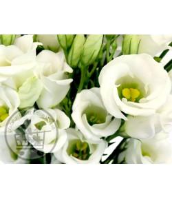 لیزیانتوس (دارای 20 تا 25 گل)