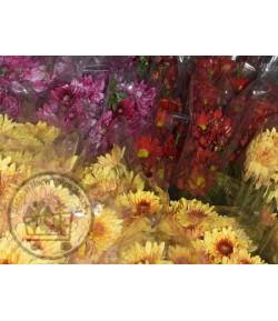 گل داوودی (۸ تا ۱۰ شاخه)