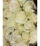 گل رز سفید