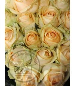 گل رز زرد داکات (20 شاخه)