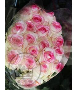 گل رز سفید لب صورتی (20 شاخه)