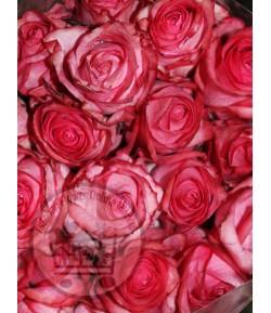 گل رز دیپ واتر(20 شاخه)
