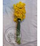 گل نرگس شهلا