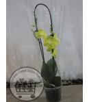گلدان شماره 31