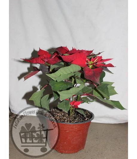 گلدان شماره 32