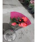 گلدان شماره 33