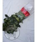 گل رز مخملی