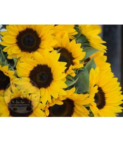 گل آفتابگردان - 5 شاخه