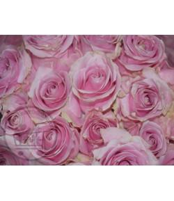 گل رز صورتی (20 شاخه)